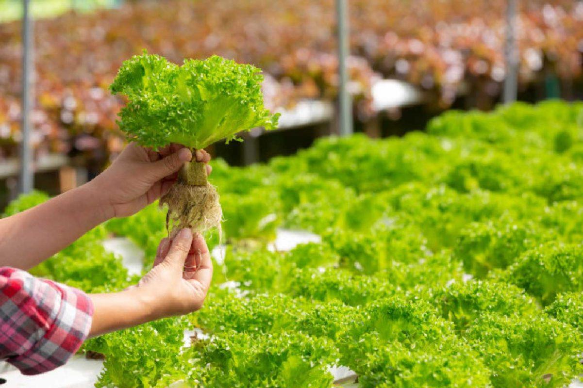 dikey tarım (modern tarım)